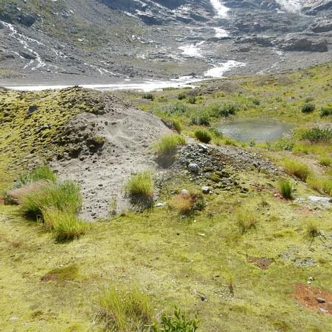 GletschervorfeldTrift. Vergrösserte Ansicht