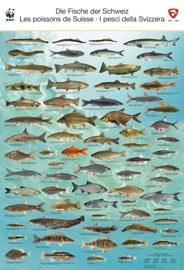 Fischposter Schweiz