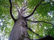 Zahlreiche KünsterlInnnen leihen Bäumen ihre Stimme: eine Jubiläumsaktion von Pro Natura