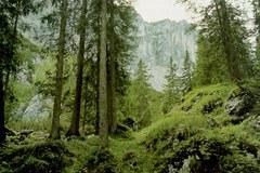 Wie wird der Wald der Zukunft aussehen?
