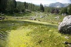 Verschmutzter Bergsee