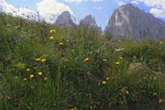 Jahr der Biodiversität 2010: Alpenländer unternehmen einiges, um zum Erhalt der Artenvielfalt beizutragen.