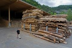 Die Umweltorganisationen WWF, Legambiente und Pro Natura kritisieren die neue Durchführungsverordnung zum Forstgesetz im Piemont/I.