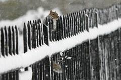 Mithilfe von Fotos bewusst machen: Der Mensch verhindert die freie Wanderung von Tieren und Pflanzen.