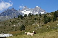 Extensiv genutzte offene und halboffene Flächen gehören zu den naturschutzfachlich wertvollsten Flächen im Alpenraum.
