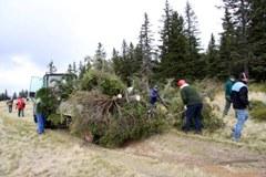 Mehr Platz für Kulturlandschaft: Entbuschung der zugewachsenen Almwiesen in Pohorje/SL.