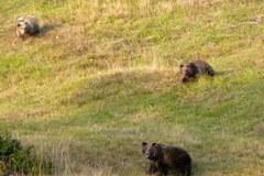 Bären Trentino