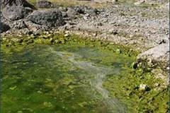 Doppelsee/SI Algenverbreitung