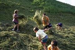Ferien am Bauernhof