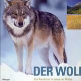 Wolf_in_unserer_Nähe