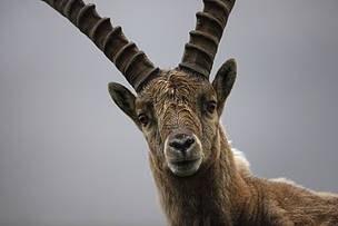 © Wild Wonders of Europe / Grzegorz Lesniewski / WWF