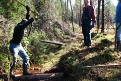 Coupes d'arbres dans les tourbières