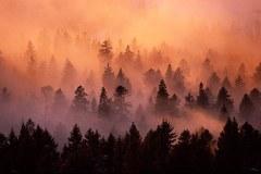 En 2011, l'office fédéral autrichien des forêts (Österreichischer Bundesforst) cherche les sept merveilles de la forêt alpine.