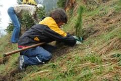Les nouveaux arbres stabilisent les pentes et protègent la population des vallées.