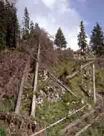 Zerstörter Schutzwald auf einer Untersuchungsfläche in Zweisimmen BE, zwei Jahre nach dem Sturm Vivian.