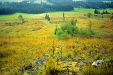 """L'""""Alleanza delle torbiere dell'Algovia"""" si prefigge la protezione delle torbiere come contributo alla difesa del clima e dalle inondazioni, alla tutela delle specie e al consolidamento dell'agricoltura."""