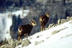 La catena montuosa dell'Hindu Kush Himalaya contiene parti di quattro hotspot della biodiversità globali.
