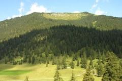 Secondo la legge federale sulle foreste dovrebbero essere condotti al pascolo foreste montane è stato convertito a pascolo.