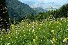 cipra france, biodiversite