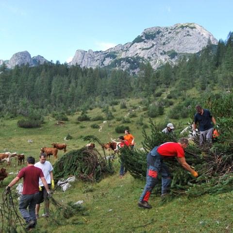 Trebljene zarasti na planini Velo polje, enlarged picture.