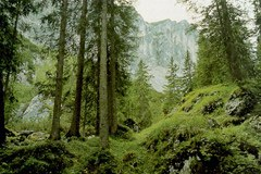 Kakšen bo gozd prihodnosti?