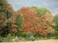 Škoda v gozdovih kot posledica suše